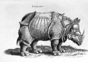 Rhinoceros, no.76